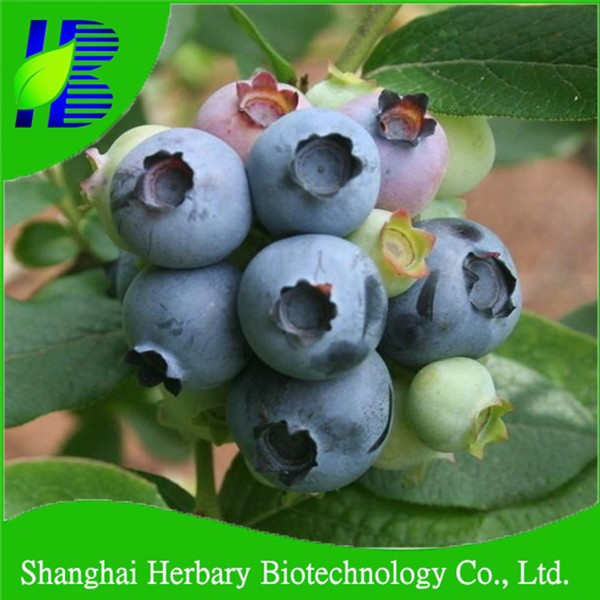 Drought and cold resistant blueberry seeds for planting