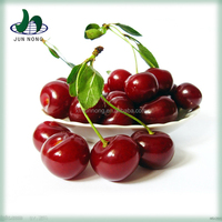 Best sale canned sour cherry