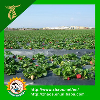 Agriculture PE material Pre-stretch Perforated mulch film with UV resistant