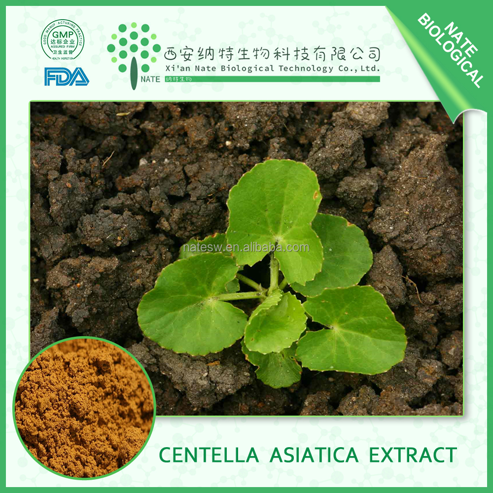 100% Natural Gotu Kola Leaf Extract 40% Centella Asiatica Herba Extract