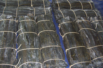 Wholesale Dried Seaweed Raw Material, Dried Kelp Board
