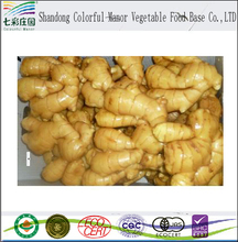 new fresh ginger market price in China