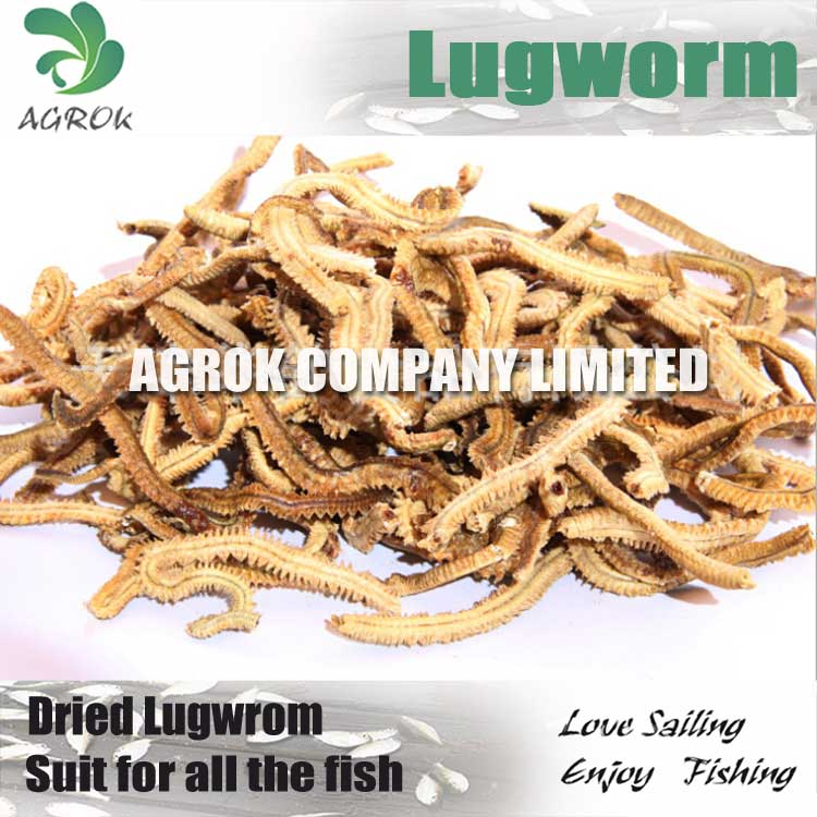 For big fish fresh freeze dry lugworm best fishing bait for Best way to freeze fish