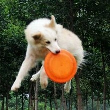 OEM Silicon Pet Fly Frisbee Pet toy