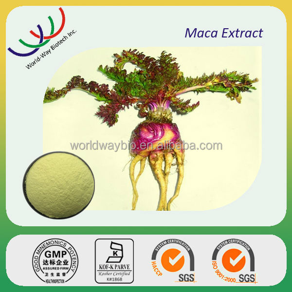 GMP factory sales Chinese herb extracts 0.6% macaenes organic maca extract powder
