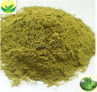 sweet tea extract health-Enhancing tea green tea