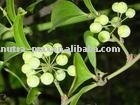 Sarsaparilla Powder Extract, Smilax china L, Chinaroot Greenbrier Rhizome Extract