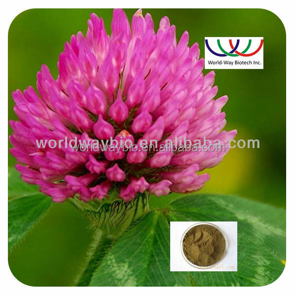 Free sample ! High quality Kosher & HACCP Hormone Replacement Trifolium pratense extract powder , red clover P.E