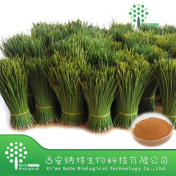 Manufacterer Supply Natural High Quality Pine Needle Extract