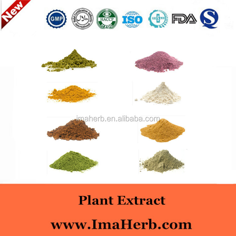 GMP Manufacture Halal Approved baical skullcap root radix scutellariae