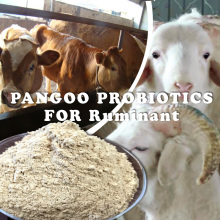 Microbial Preparation , feed for ruminant