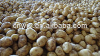 New Crop Fresh Holland Potato With Low Price