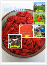 red Ningxia Goji Berry/Wolfberry Fruit/Chinese Medlar seeds