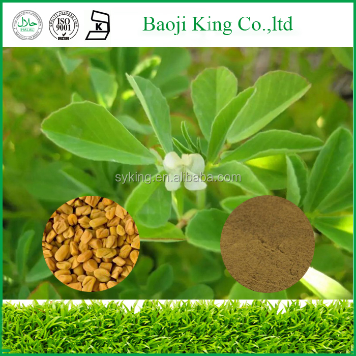Common Fenugreek Seeds/ Raw Herb Exporter/ Spices menufacturer
