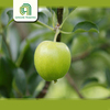 good brand chinese shaanxi fruit import fruit with high quality