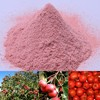 Freeze Dried Fruit Powder Freeze Dried