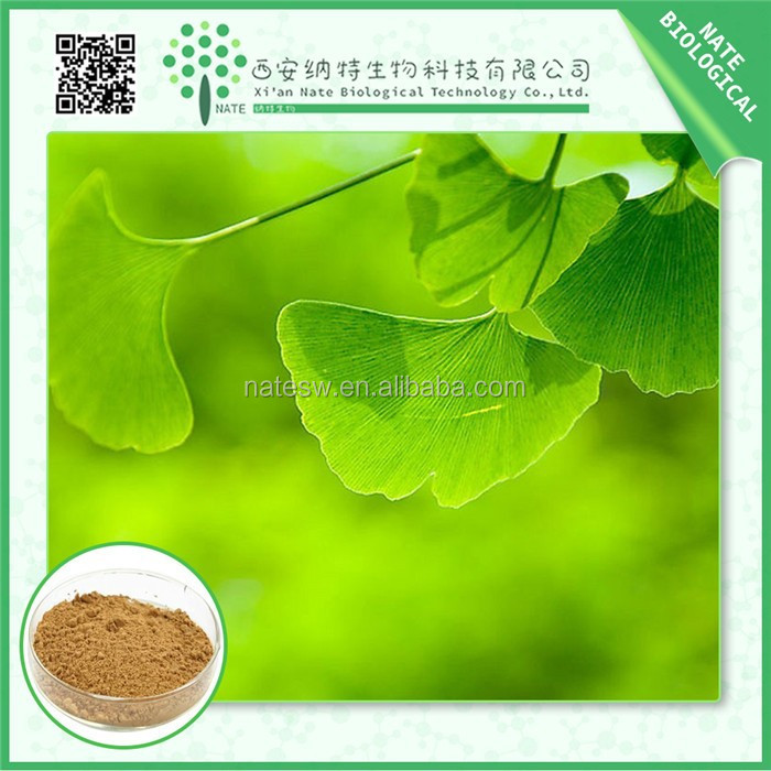 China supplier pure natural ginkgo biloba standardized extract 24:6