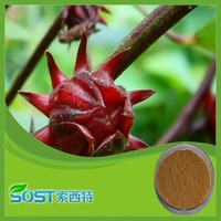 2015 herbal medicine best selling products free sample roselle powder