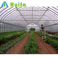 Customized service new design Poly tunnel single span green house on sale