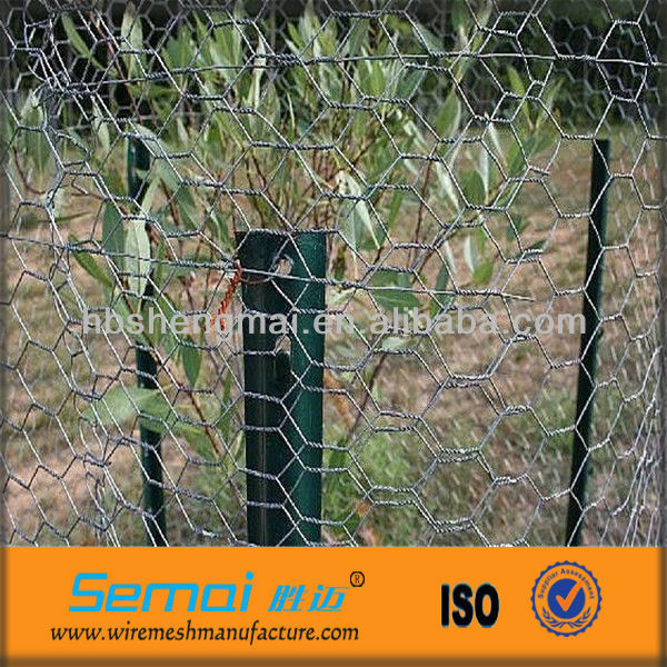Galvanized Hexagonal Wire Mesh Fence for tree guard/chicken cage