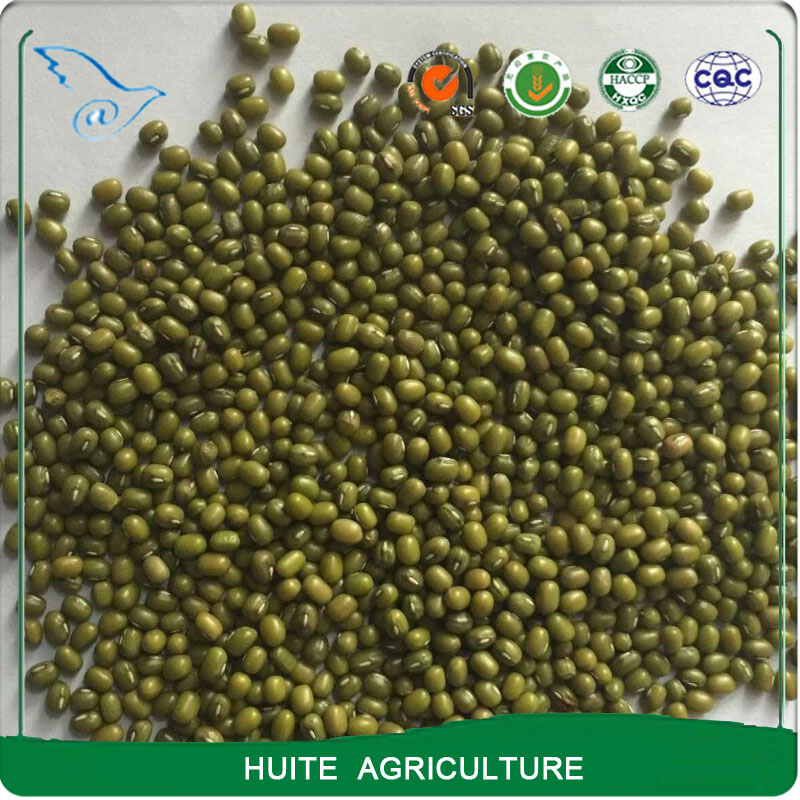 Price for green mung beans sale