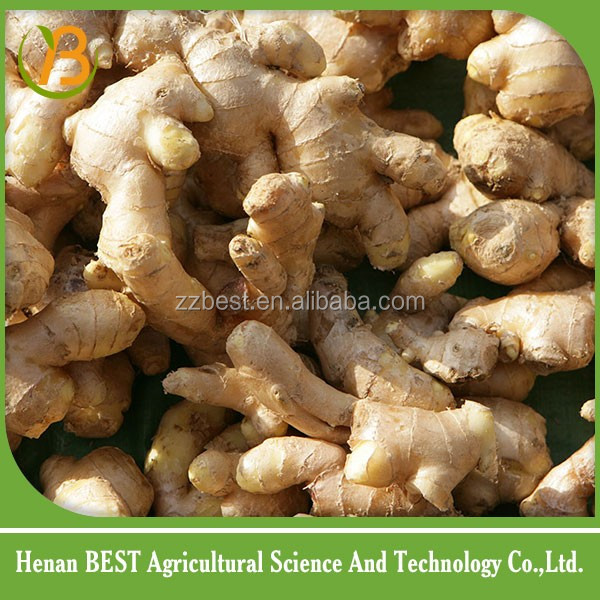 buy fresh ginger and China supplier at ginger international price