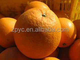 Citrus orange,Fresh Navel Orange