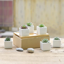 New design small indoor succulents ceramic flower pots