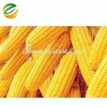 quality importers frozen sweet corn for Nutritious