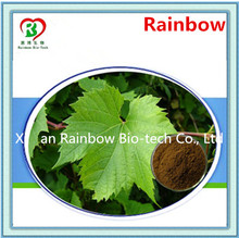 10 years gold supplier grape leaf extract Professional black cohosh extract