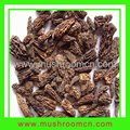 Dried Conica Morels