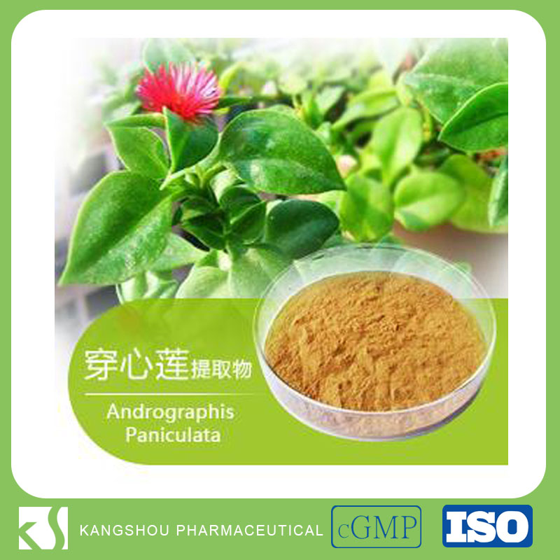 Chinese Herbal Medicine 98% Andrographolide Common Andrographis Herb Extract Powder