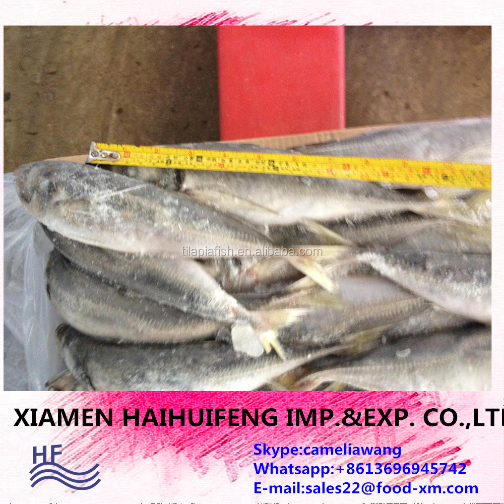 Best Quality Seafood Product Natural Whole Frozen Horse Mackerel