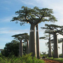 artificial baobab tree artificial large tree large fake tree for wholesale