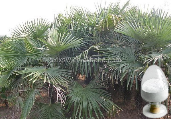 Modern technology produced useful saw palmetto extract capsules tablets