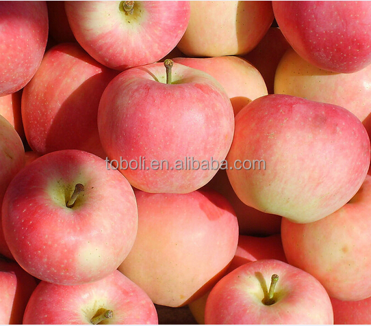 Chinese whosale 2017 new Qinguan Apples fresh fruits