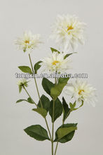 stable supplying factory variegate color exporting edelweiss flower