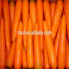 good quality fresh carrot supplier in china wholesale bulk fresh Carrot