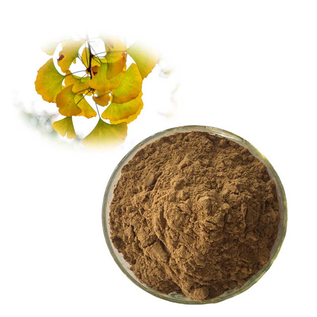 Supply high quality free sample 100% natural 24/6 Flavone ginkgo biloba extract
