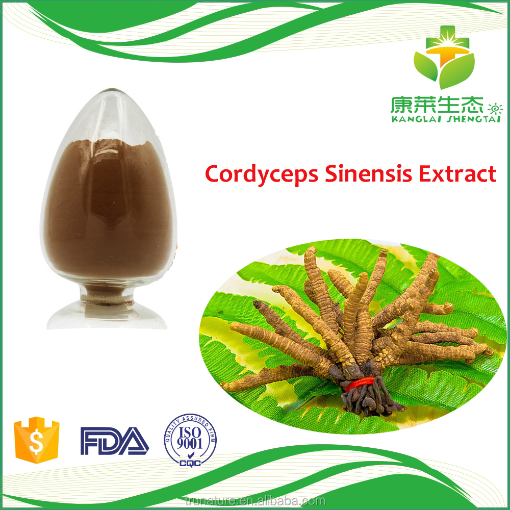 Winterworm Summerherb Powder Supplier, Pure Dong Chong Xia Cao Mycelium Powder