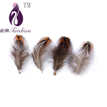Reeves Venery Pheasant tail feathers,chicken feathers