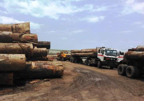 Tali logs for sale, excellent price