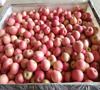 Chinese grower not trader red fuji apple 16kg pack 100-125#