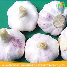 High Quality Competitive Price Garlic Exporters Farmer Organic Fresh Natural Pure Garlic