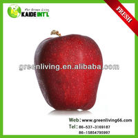 2014 hot sale Chinese red huaniu apple fruit
