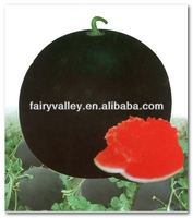 Black Win NO.1-100% Pure Black Peel Red Meat Seedless Watermelon Seeds For Sale