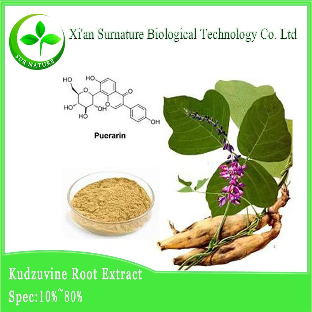 high quality pueraria mirifica extract from experienced supplier