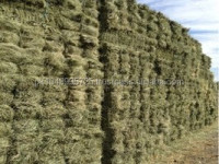 Premium Grade Cattle Feed Alfalfa Hay for Sale