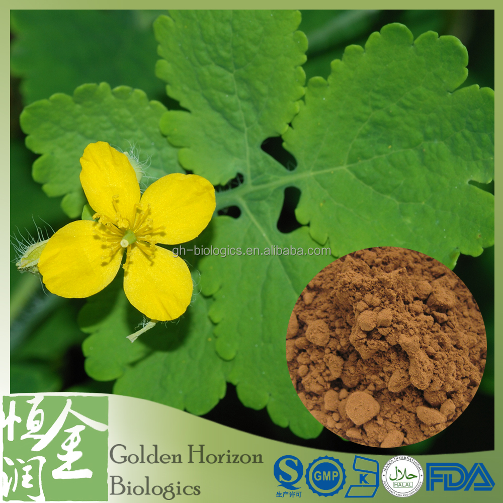 Free Sample Pure Natural Chelidonium Majus Extract Powder Chelidonine Chelerythrine