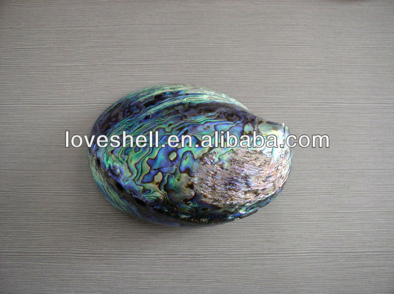 polished abalone shell polished mother of pearl